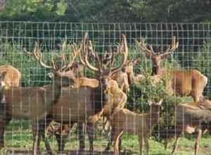 elk-hunt-01