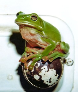 frog4