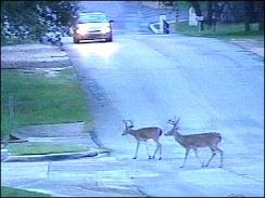 deer suburbs