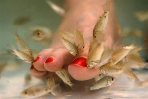 carp_fish_pedicure