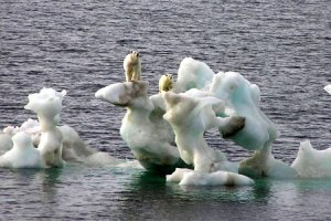 polar_bear_ice
