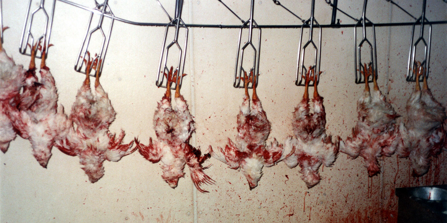 slaughter house problem Working 'the chain,' slaughterhouse workers face lifelong injuries : the salt workers at american slaughterhouses and meat processing plants perform.