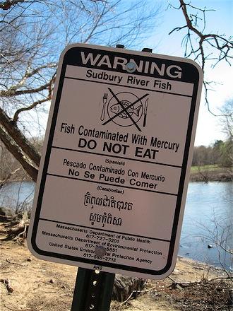 Mercury Fish on Survey Says  100  Mercury Contaminated Fish    Animal Blawg