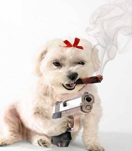[Image: dogwithgun.jpg]