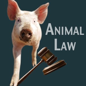 What is Animal Law?