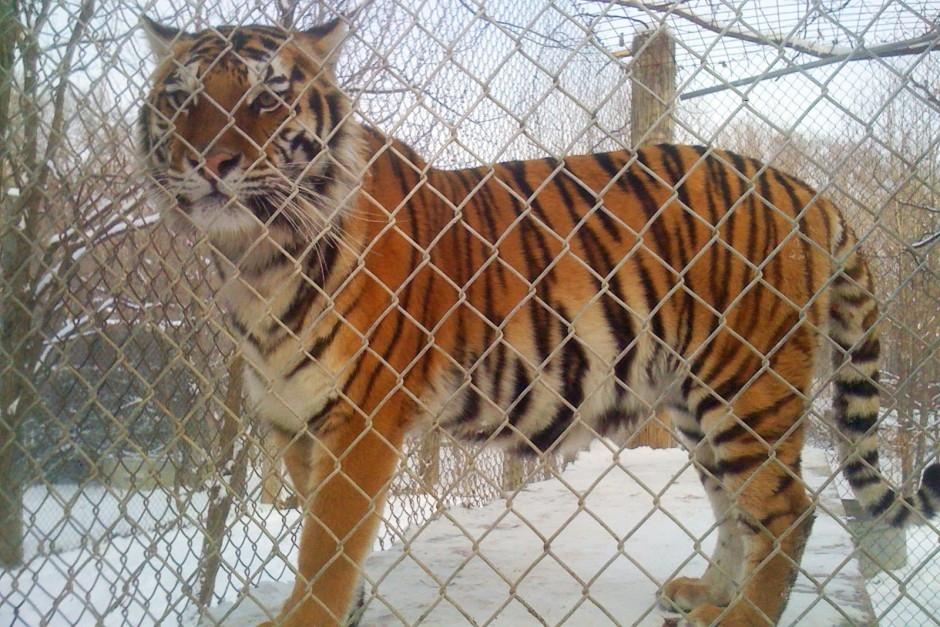 Big Cat Animal Rescue Indiana