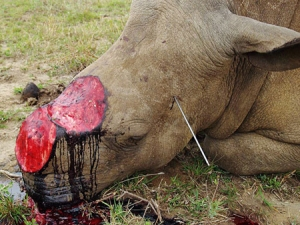 Rhino-horn-trade