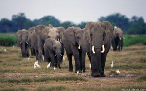 ElephantImage