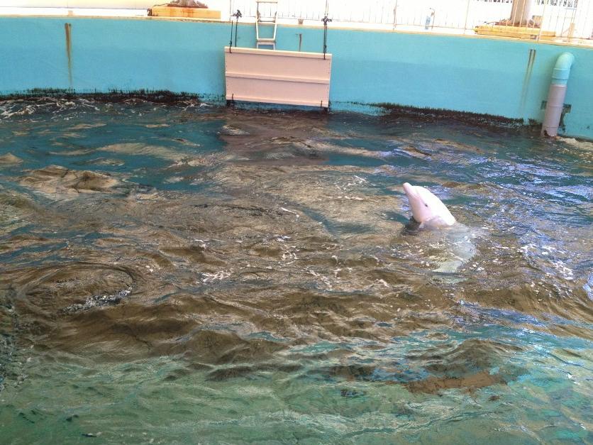 whale dolphin porpoises little guide