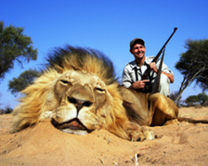 the-effects-of-lion-trophy-hunting-on-lion-populations-1