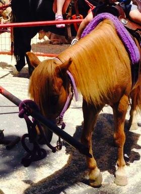 pony-356