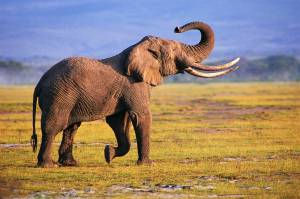 Photography-Elephant-Wallpapers