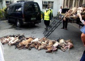 Pile of dead dogs